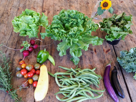 What's in your CSA share this week?