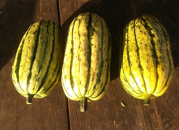 Delicata - Winter Squash