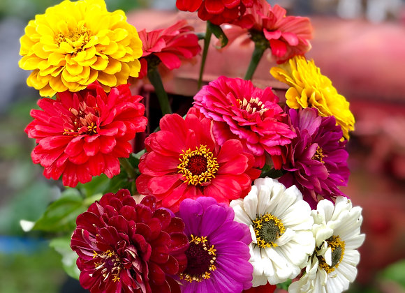 Bi-weekly Flowers (10 pick-ups, prorated)