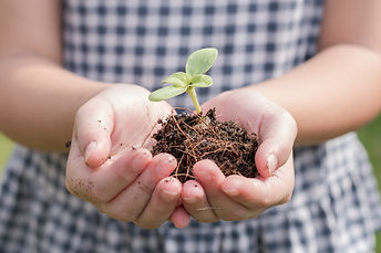 Tree planting growing on soil in girl ch