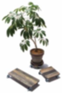 PLT Plants Tray 影加工.jpg