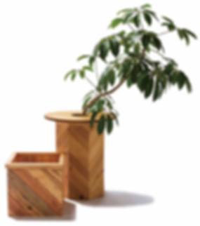 PLT Plants Box影加工.jpg