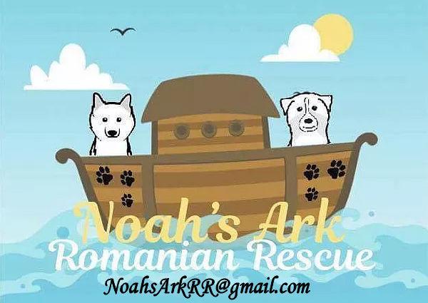 Noah's Logo.jpg