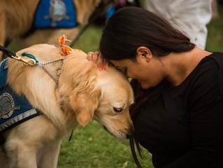 "In Shaken Orlando, Comfort Dogs Arrive with ""Unconditional Love"""