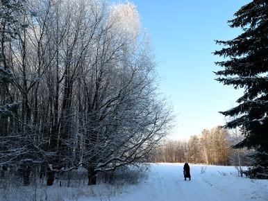 Зима в Лесопарке