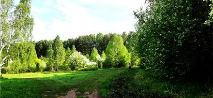 поляна 10.jpg