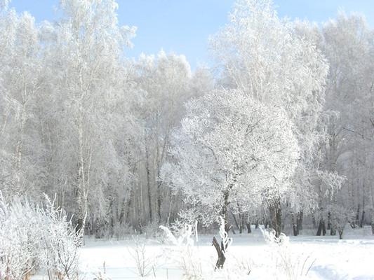 Роща. Зима.jpg