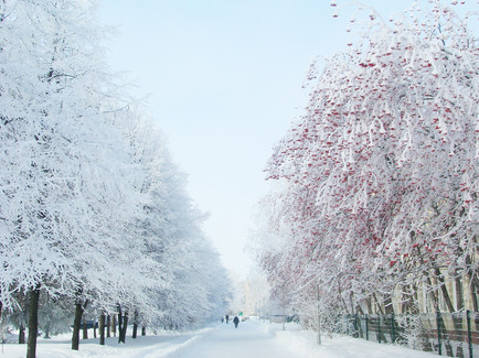 14 аллея зима.jpg