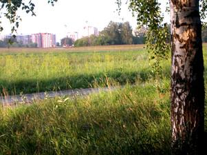 Вид с аллеи на Краснообск.jpg
