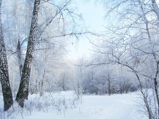Зима в роще.jpg