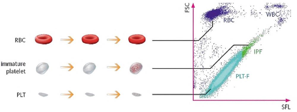 IPF - незрелая фракция тромбоцитов