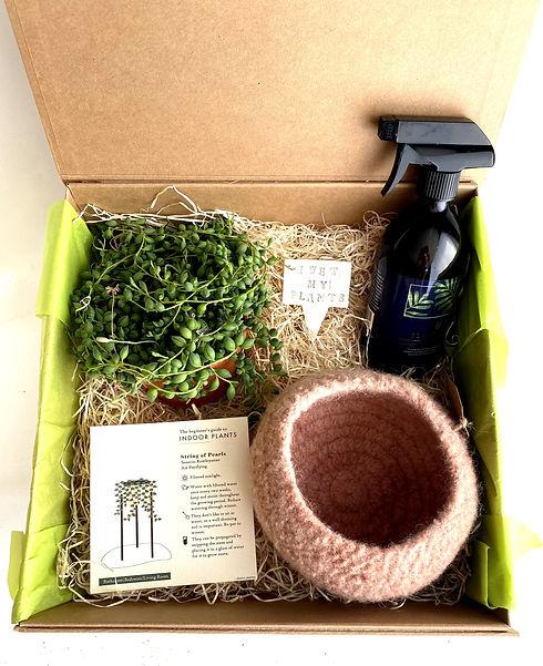 Large house plant gift hamper