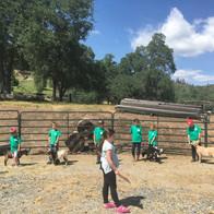 Mountain Ranch Swine Group