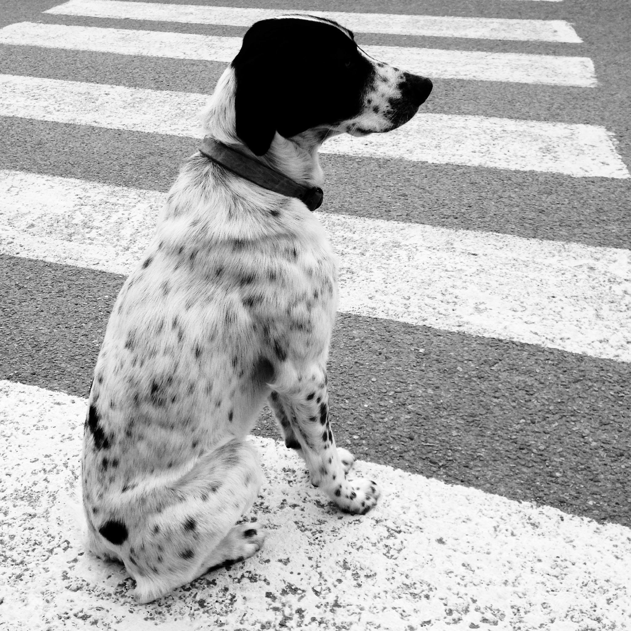 Le passage-chien