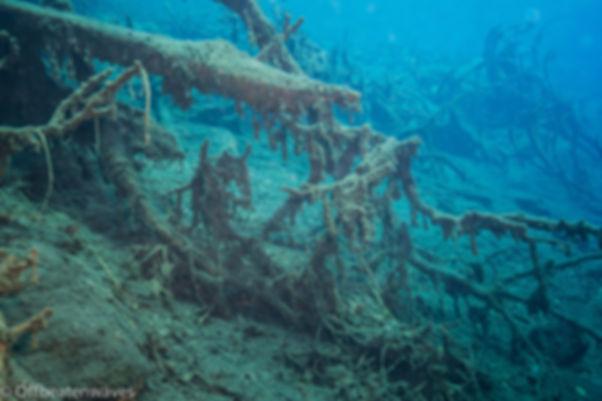 Underwater tree