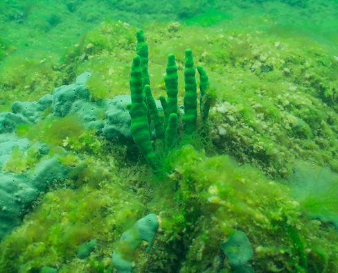 Listvyanka Underwater