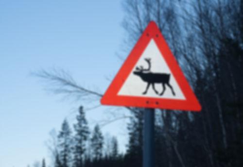 Reindeer crossing sign