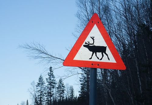 Reindeer crossing sign