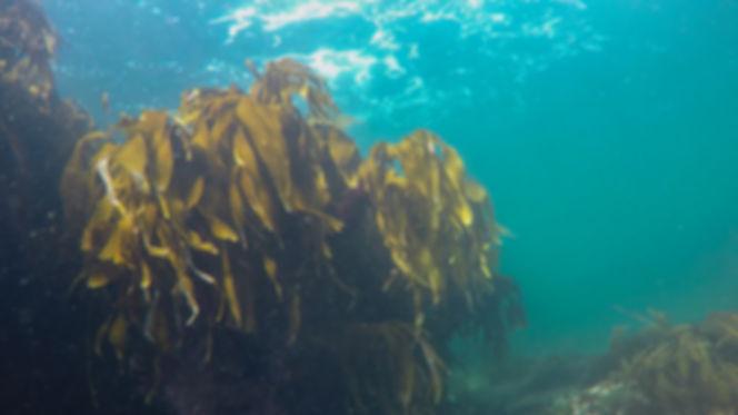 Underwater Kelp