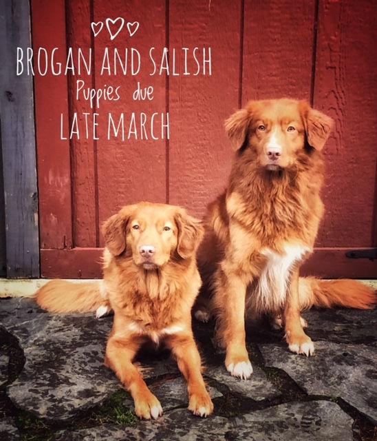 Brogan and Salish.jpg