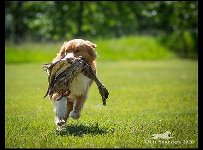 gunnar duck 2.jpg