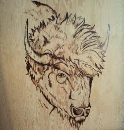 Scorched Earth: Plains Bison