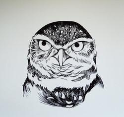 Scorched Earth: Burrowing Owl