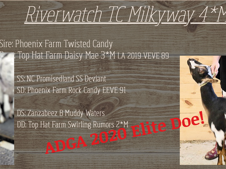 Announcing our very own ADGA 2020 Elite Doe, Riverwatch TC Milkyway 4*M!