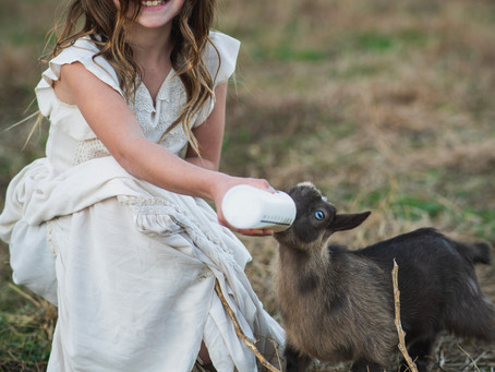 Gholson Photography is offering Christmas Mini Sessions on our farm!