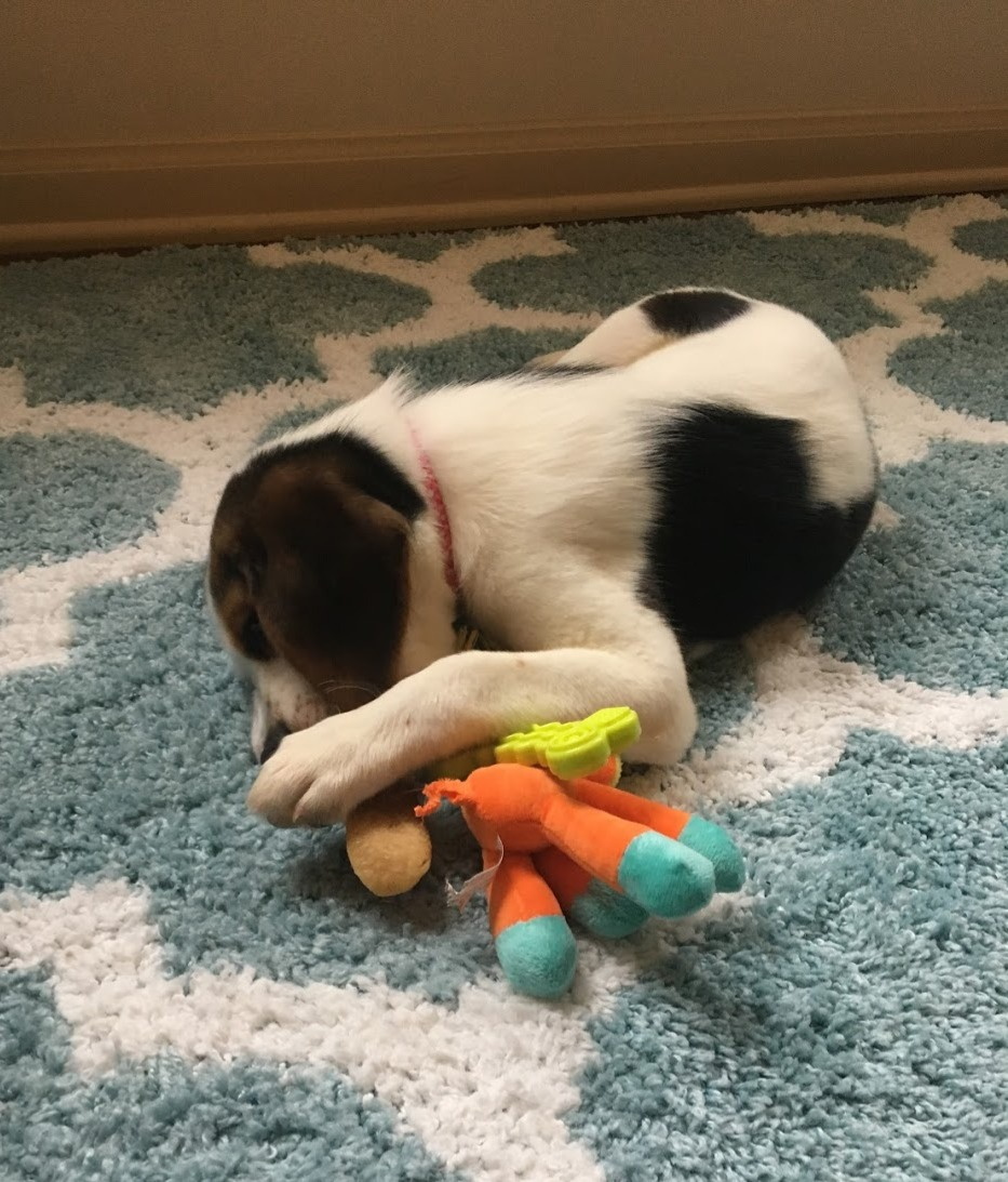 Favorite toys from Just Barked