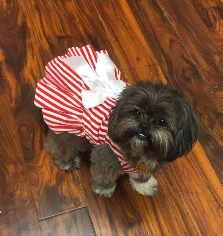 Christmas dress from Just Barked