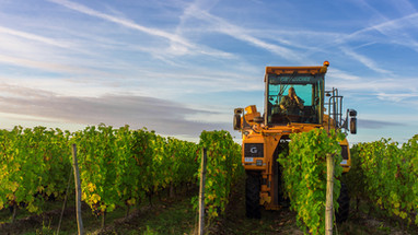 kreazim kazim dubovski photographe reportage vigneron vin vendanges raisins