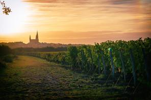 kreazim kazim dubovski photographe paysage saumur puy notre dame  vigne vigneron vendanges