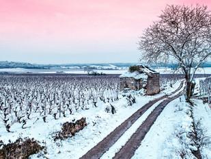 Les vignes du Champigny sous la neige <3