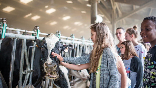 kreazim kazim dubovski photographe saumur reportage parc naturel loire anjou touraine ferme