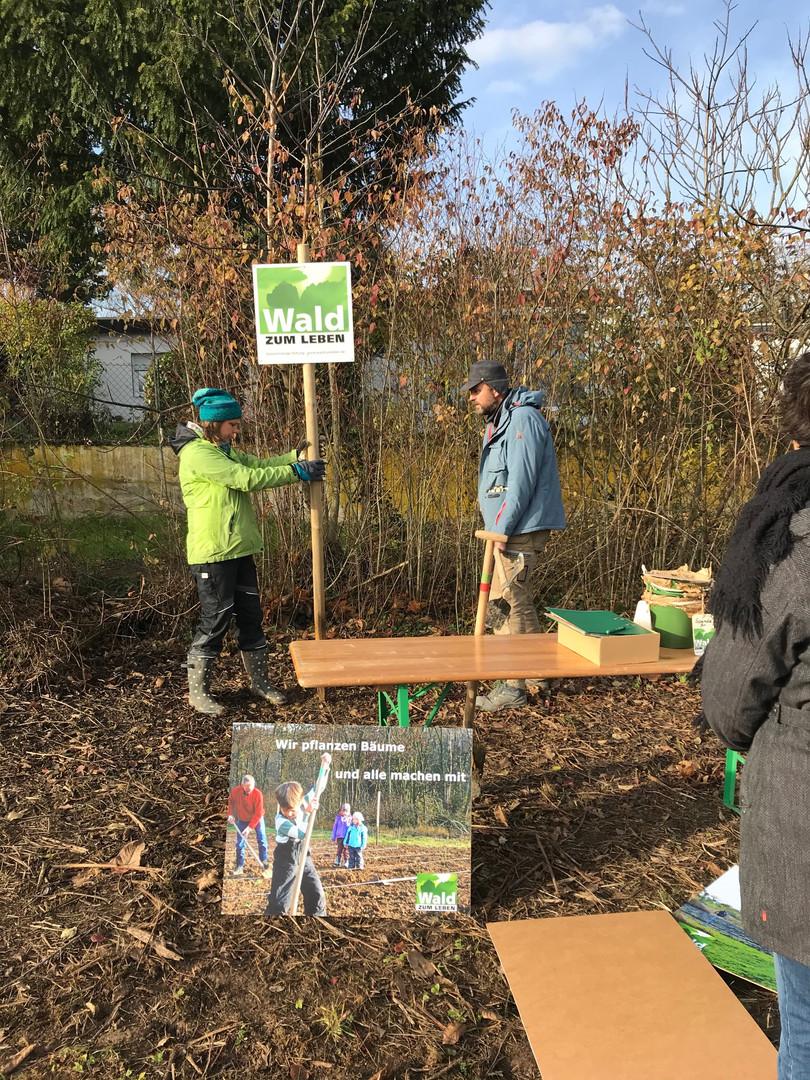 Stiftung Wald zum Leben