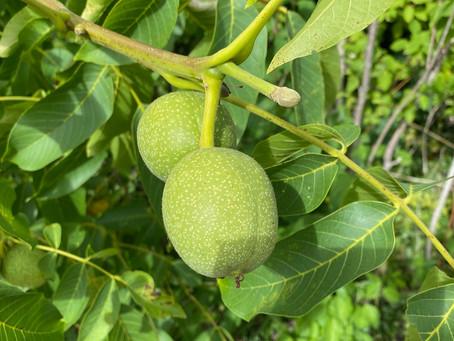 Nüsse und andere Früchte