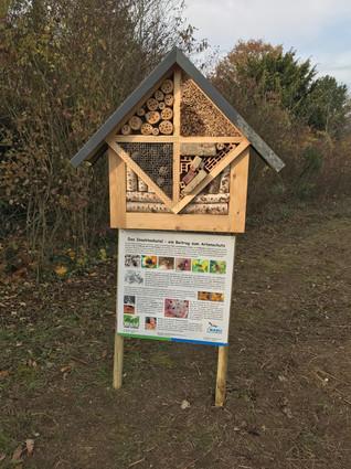 Informationen über Wildbienen