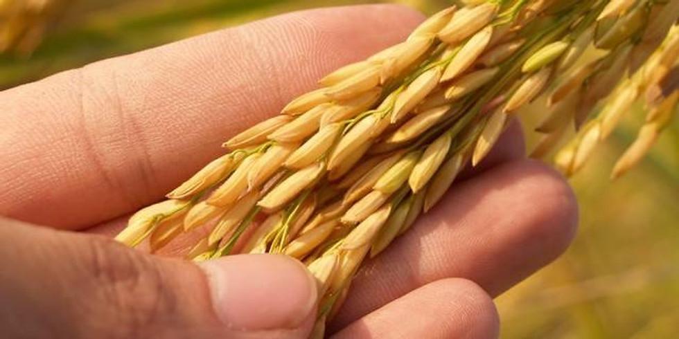 Zoom - Cultivo Biodinâmico de Arroz