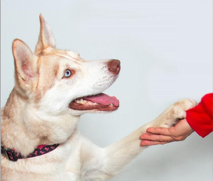 dog hand screenshot.jpg