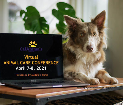 ACC21 dog laptop sq.jpg