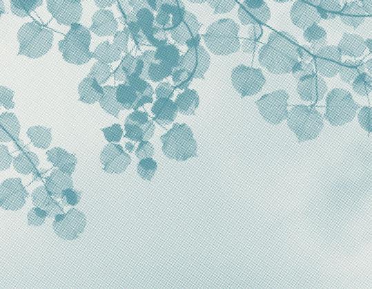 Homepage_BannerImage2.jpg