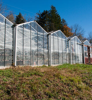 SG4 Smith Mill Works Glass Greenhouse Ci