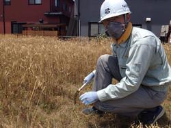 小麦収穫体験ちよだ.jpg