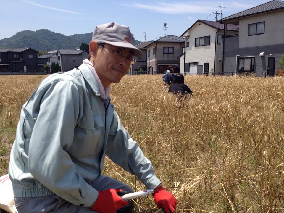 小麦収穫体験尾嵜.jpg