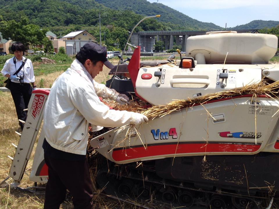 小麦収穫体験伊藤.jpg