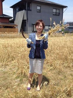 小麦収穫体験朝日.jpg
