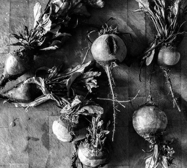 East Anglian sugar beet