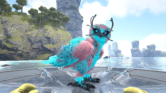 Top stats Male or Female Snow Owl Cyan-Pink (Cotton candy)