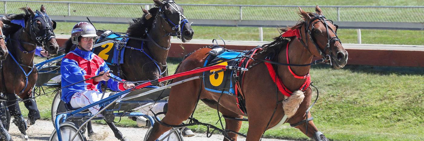 Racehorse-training-banner1.jpg